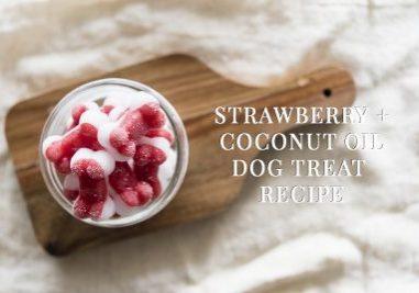 Strawberry + Coconut Oil Dog Treat Recipe | www.thepugdiary.com