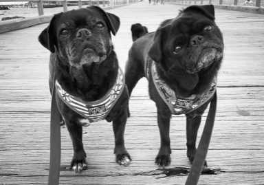 Confessions of a Pug Mum: My Pugs are My Saviour | www.thepugdiary.com