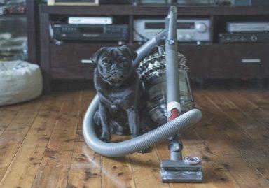 3 Tips for Minimising Pug Hair Around the House | www.thepugdiary.com