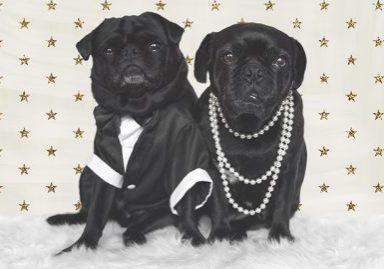 Merry Christmas from The Pug Diary | www.thepugdiary.com
