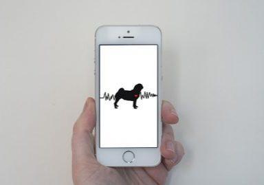 Pug Heartbeat Phone Wallpaper | www.thepugdiary.com