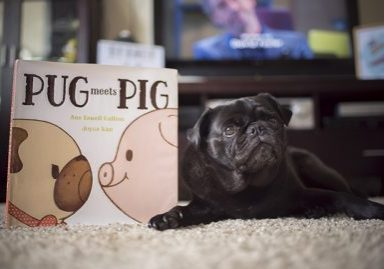 Pug Meets Pig Book Giveaway | www.thepugdiary.com