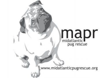 Pug Rescue Profile of Mid Atlantic Pug Rescue | www.thepugdiary.com