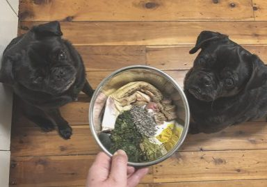 Raw Feeding for Pugs: How to Balance | www.thepugdiary.com