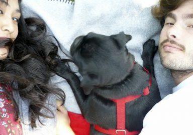 Samantha + Zane's Pug Parent Profile | www.thepugdiary.com