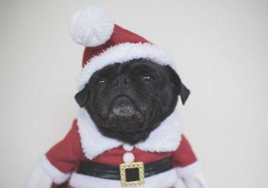 The Best of Christmas | www.thepugdiary.com