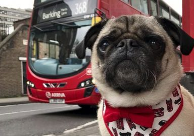 Top 10 Dog Friendly Places to Visit: London, England | www.thepugdiary.com