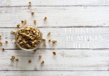 Turkey + Pumpkin Bites Dog Treat Recipe | www.thepugdiary.com