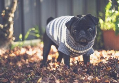 7 Must Have Fashions for This Winter | www.thepugdiary.com