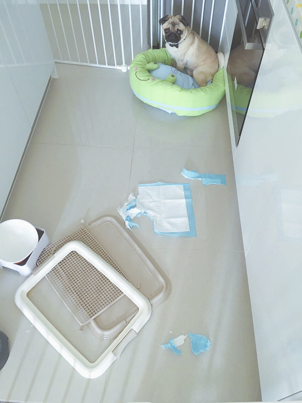 Frank's Social Pug Profile | www.thepugdiary.com