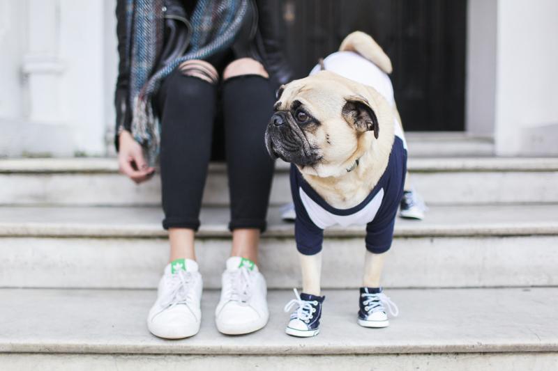 Ari's Social Pug Profile | www.thepugdary.com