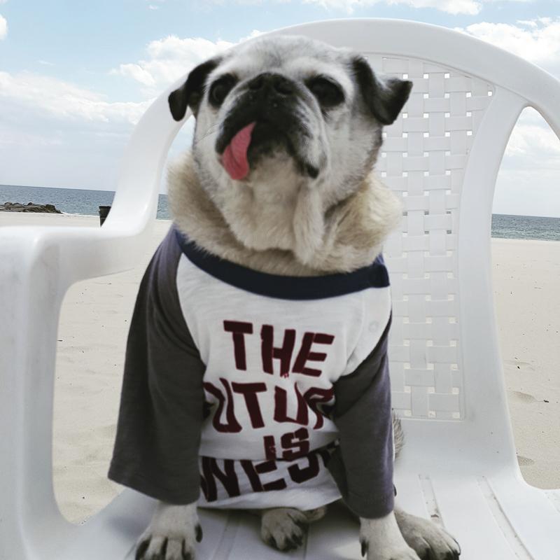 Rocco's Social Pug Profile | www.thepugdiary.com